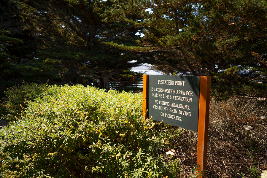 Pescadero Point and Hill Preserve Image 2